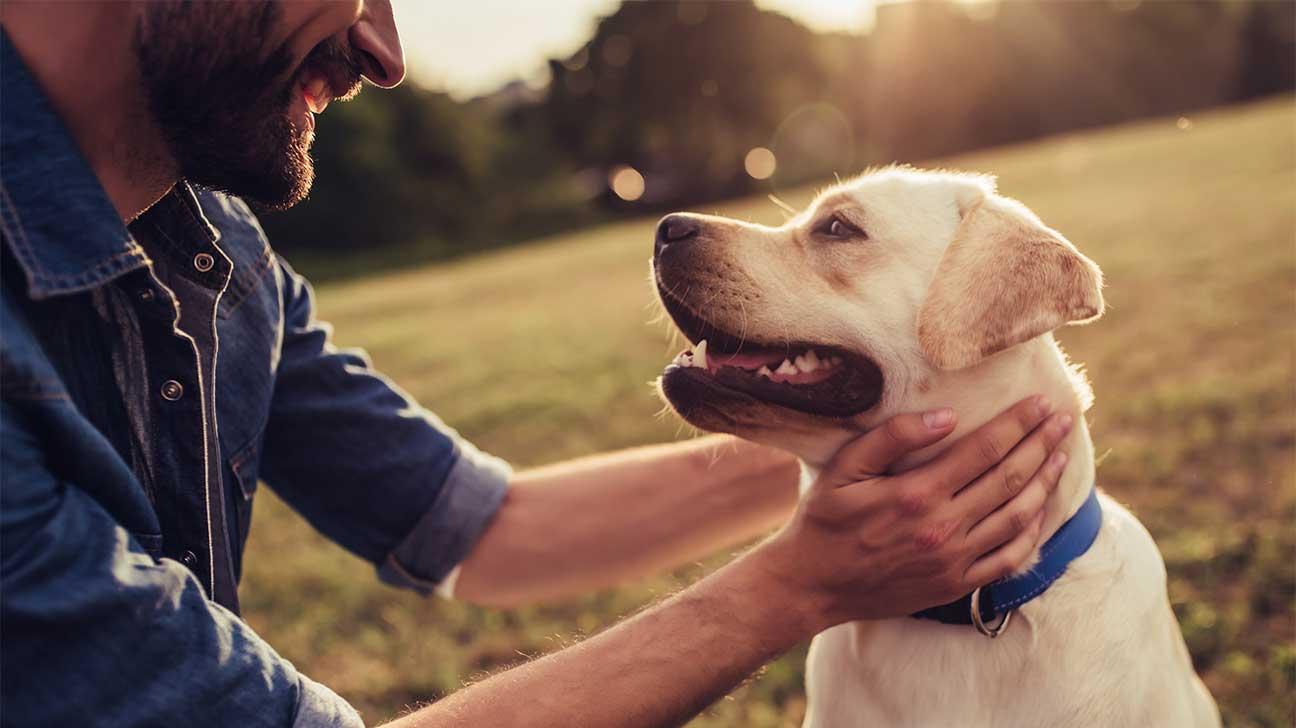 6 Best Pet-Friendly Drug Rehab Centers - Addiction Resource
