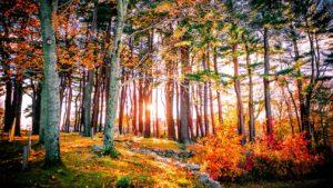Addiction Treatment Options In Taunton, Massachusetts