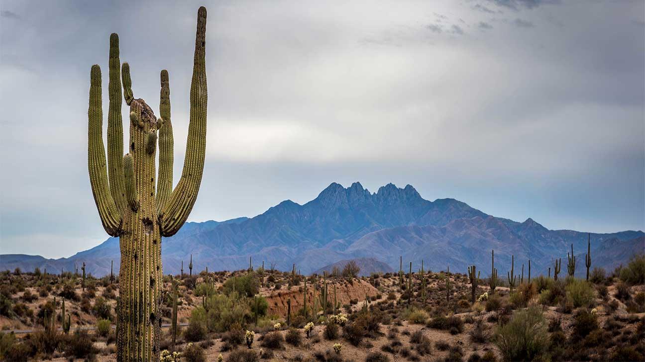 Casa Adobes, Arizona Alcohol And Drug Rehab Centers