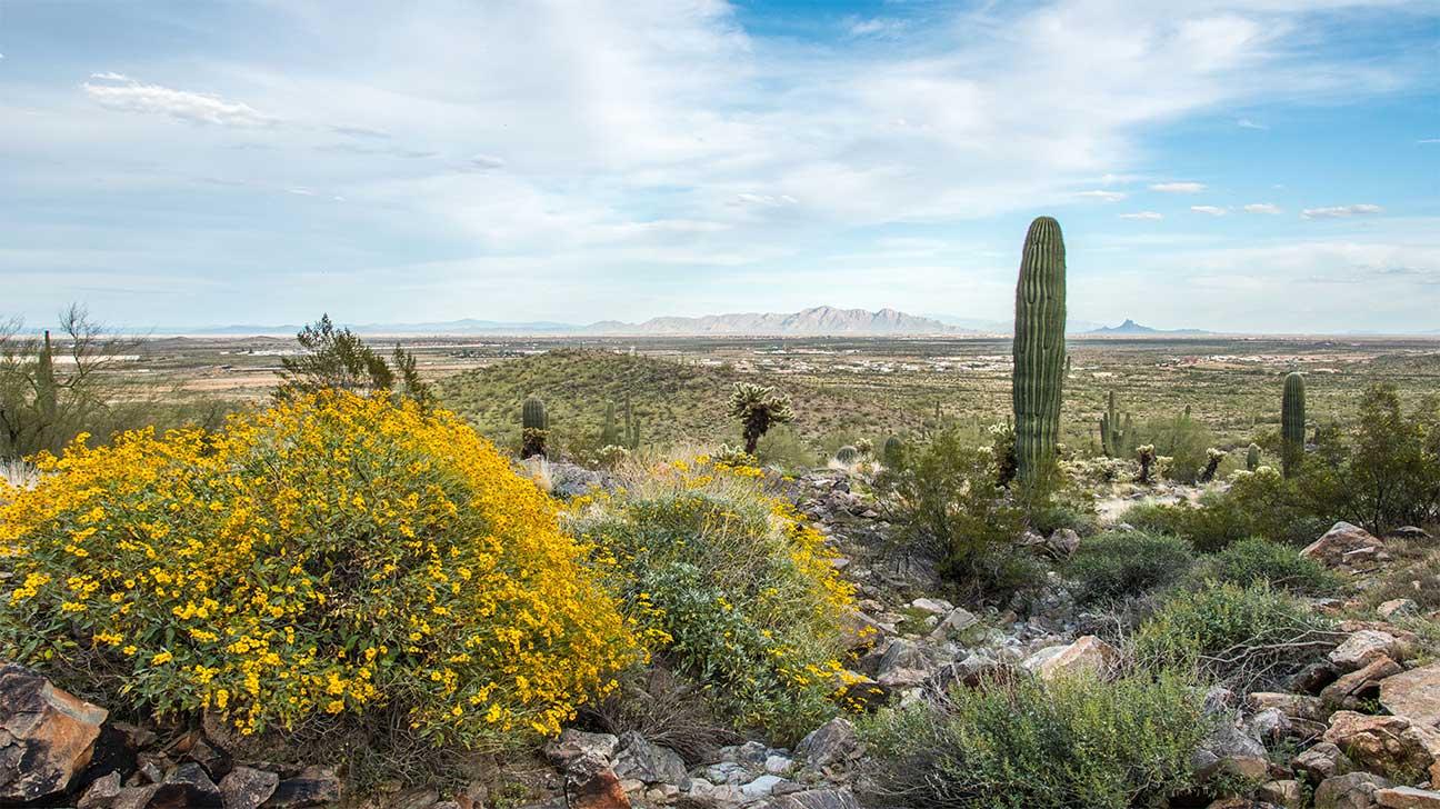 Casa Grande, Arizona Alcohol And Drug Rehab Centers