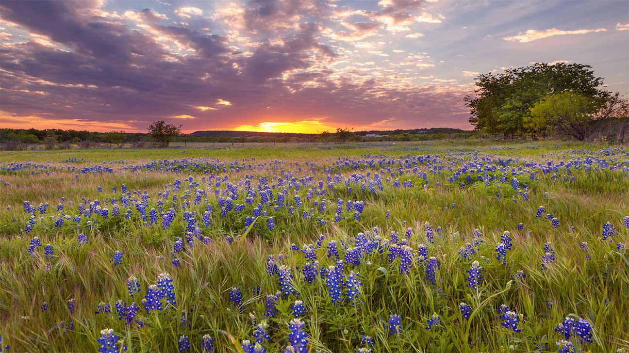 College Station, Texas Alcohol And Drug Rehab Centers