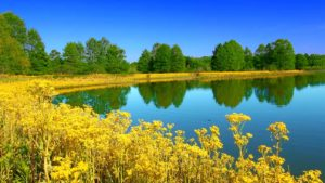 Downers Grove, Illinois Alcohol And Drug Rehab Centers