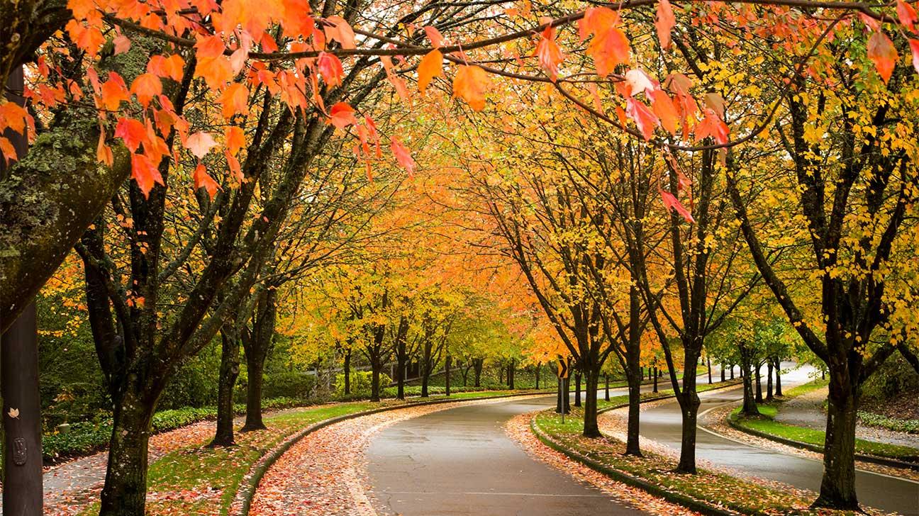 Beaverton, Oregon Alcohol And Drug Rehab Centers