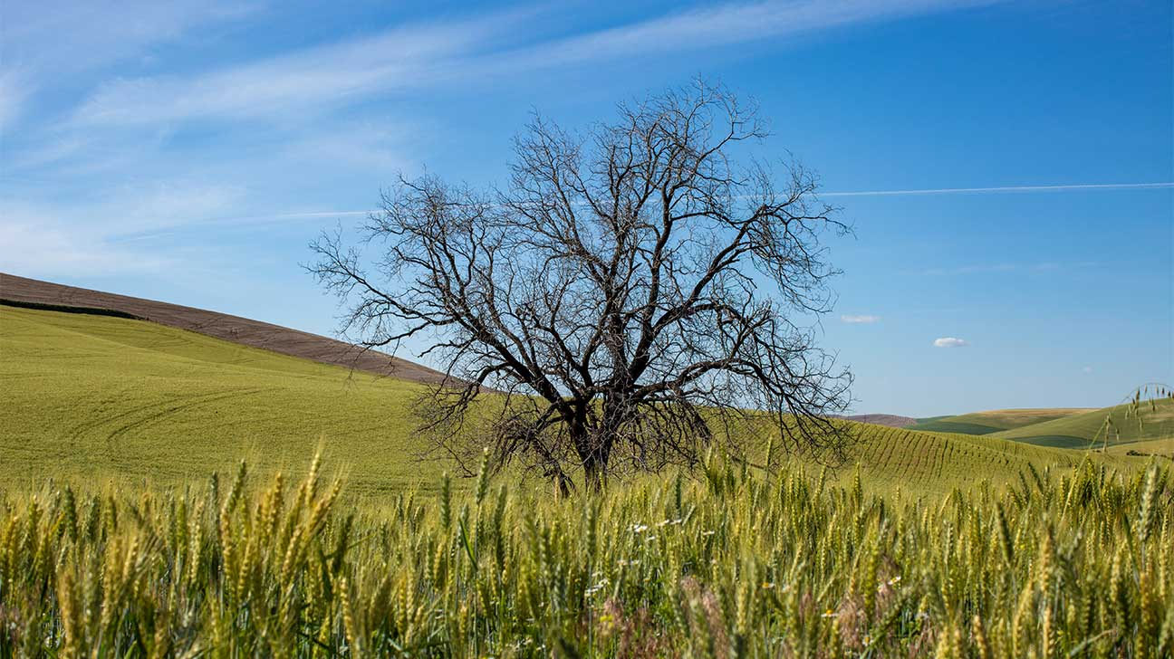 Lone Tree, Colorado Alcohol And Drug Rehab Centers