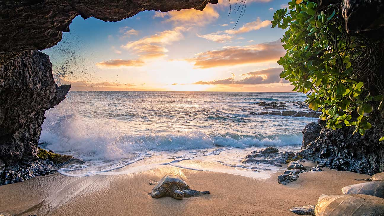 Hawaiian Paradise Park, Hawaii Alcohol And Drug Rehab Centers