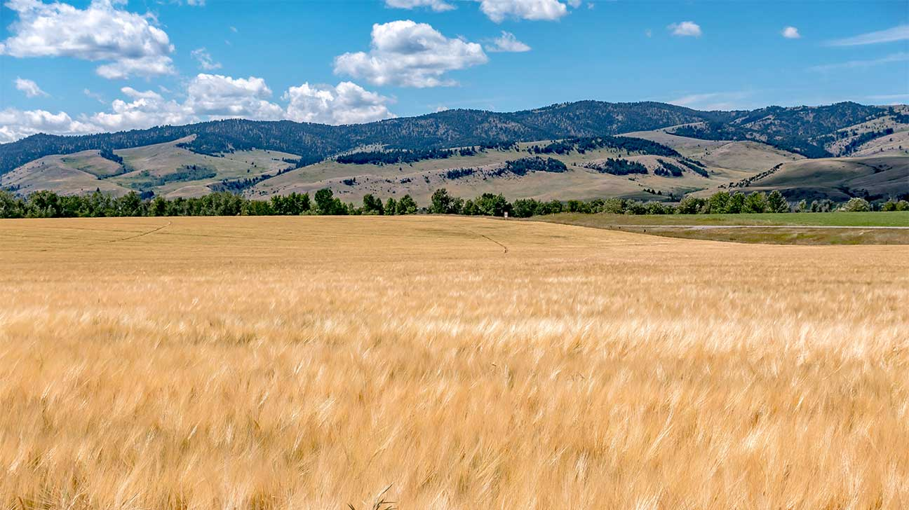 North Browning, Montana Alcohol And Drug Rehab Centers